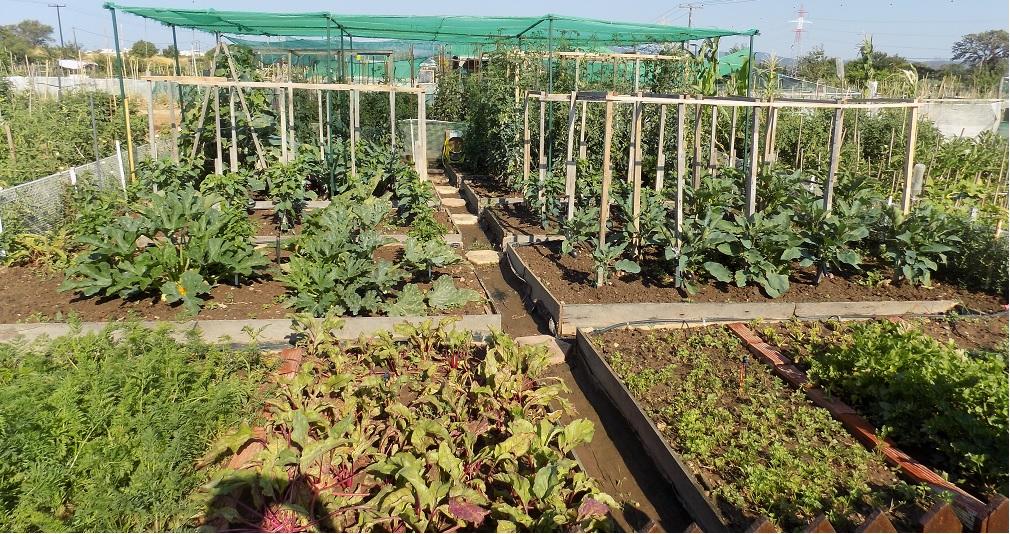 Βιοαγρός Δήμου Αλεξανδρούπολης: Ένα υπόδειγμα Δημοτικού Λαχανόκηπου
